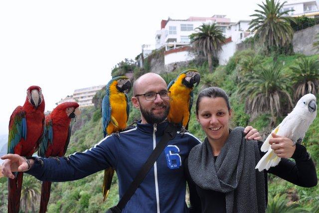 papagei haltung