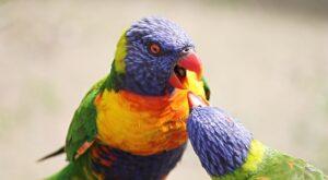 Papageien Haltung