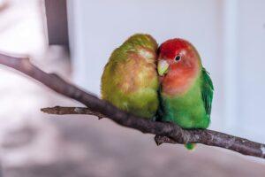 papagei haltung wohnung